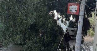 بالصور … سقوط شجرة كبيرة بالبصارطة بسبب سرعة الرياح والأمطار الشديدة واغلاق الطريق .