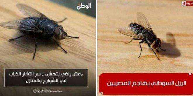 #تحذير  هااااام لمن يهمه الامر احذروا الذباب السوداني