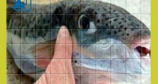 #عاجل|لقى مواطن بورسعيدي حتفه اثر تناولة سمكة سامة من فصيلة الارنب
