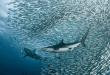 هل التحديات تبقينا في نشاط دائم؟  حيل يابانية وتحدي سمكة القرش